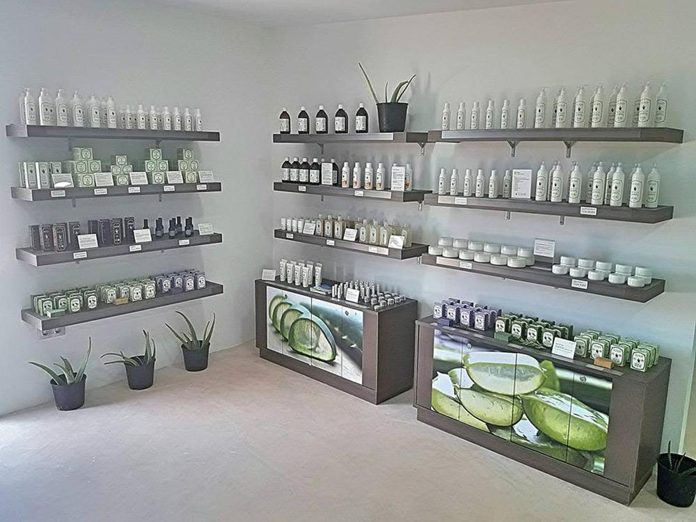 Visita guiada a plantación y museo Aloe Vera Ibiza